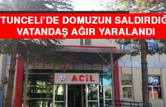 Tunceli'de Domuzun Saldırdığı Vatandaş Ağır Yaralandı