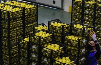Limonda ihracat hedefi 300 milyon dolar