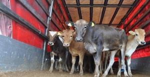 16 Bin Genç Çiftçiye 503 Milyon Lira Hibe Verilecek
