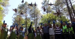 Sinop'ta 2 Bin Kınalı Keklik Doğaya Bırakıldı