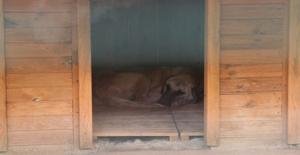 Sivas Kurduğu 'Hayvan Oteli' İle Örnek Oluyor