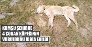 Komşu Şehirde 4 Çoban Köpeğinin Vurulduğu İddiası
