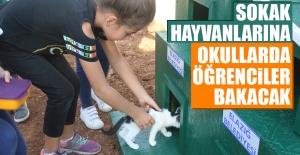 Sokak Hayvanları Okullara Yerleştirilecek