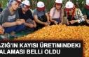 Malatya Kayısı Üretiminde Elazığ'ı Geride...