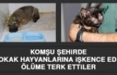 Komşu Şehirde Sokak Hayvanlarına İşkence Edip Ölüme Terk Ettiler
