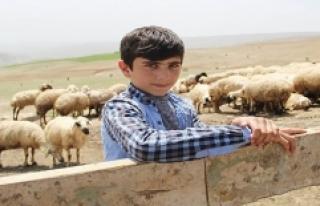 Çemişgezekli Habib'in TEOG Başarısı