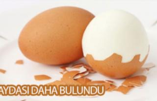 Günde Bir Yumurta...