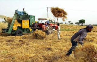 Başbakan'dan Çiftçiye Müjde: Hububat Alım...