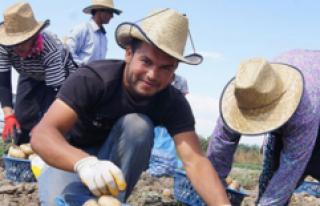 Genç Çiftçi Projesi Fındık Üretimini de Olumlu...