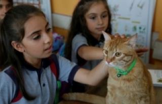 """Kedi """"Tombi"""" yaz tatilinin ardından okula..."""