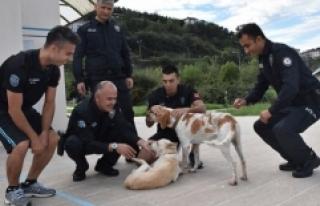 Garip ve Haydut isimli köpekler deniz polisinin maskotu...