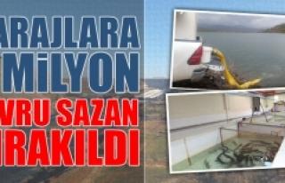 Barajlara 5 Milyon Yavru Sazan Bırakıldı