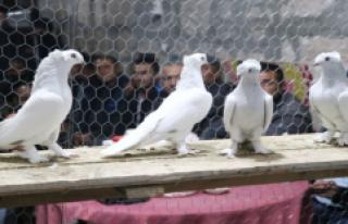 Türkiye'nin Dört Bir Yanından Gelip Araba...