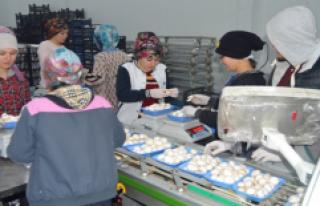 Destek Alarak İş Yerini Büyüten Girişimci, Türkiye'nin...