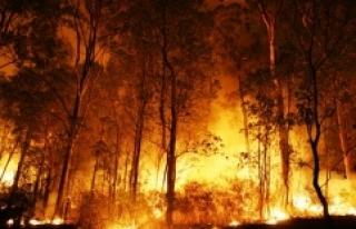 İklim Değişikliğine Karşı Devasa Mücadele:...