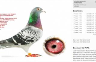 Dünyanın En Pahalı Güvercini, Belçika'da...