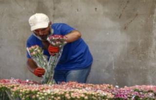 Anneler Günü İçin 39 Ülkeye 45 Milyon Dal Çiçek...