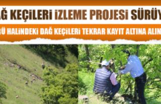 Dağ Keçileri İzleme Projesi Sürüyor