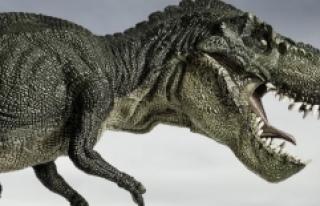 Devasa T-Rex'in Atalarının Kendinden Daha Küçük...