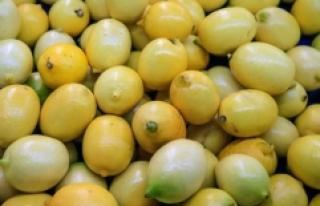 Türkiye'nin limon ihracatı 564 bin tona yaklaştı