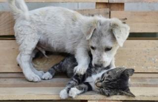 Kedi yavrusu ile köpek yavrusunun dostluğu