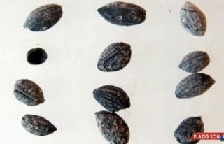 Zeytincilik tarihini değiştirecek araştırma