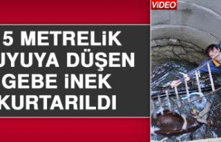 15 Metrelik Kuyuya Düşen Gebe İnek Kurtarıldı