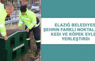 Elazığ Belediyesi Şehrin Farklı Noktalarına Kedi...