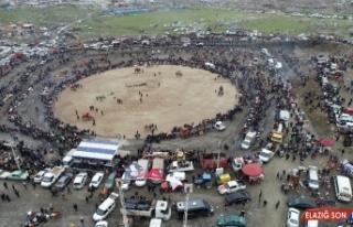 Salihli'deki deve güreşi festivali 23 Şubat'ta...
