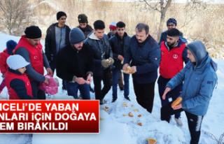 Tunceli'de Yaban Hayvanları İçin Doğaya Yem...