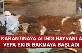 Aile Karantinaya Alındı, Hayvanlarına Vefa Ekibi...