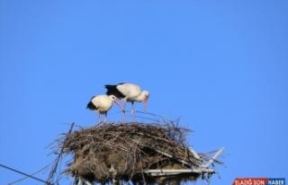 Bingöl, 168 kuş türüne ev sahipliği yapıyor