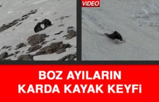 Boz Ayıların Karda Kayak Keyfi