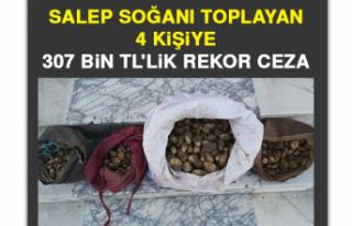 Elazığ'da Salep Soğanı Toplayan 4 Kişiye...