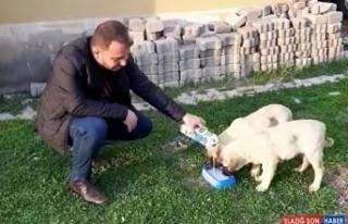 Karakoçan Belediyesinden sokak hayvanlarına süt...