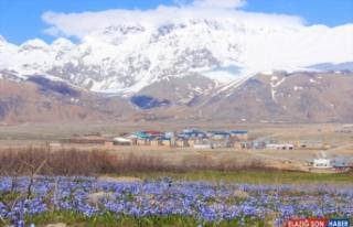 Munzur'un dağlarında kar, ovalarında çiçekler...