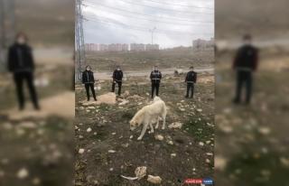 Van polisinden sokak hayvanlarına yem ve mama desteği