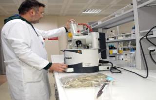 'Zeytin ağacı yaprağı, bağışıklık sistemini...