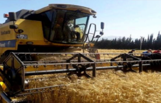 Buğdaydaki Rekolte Artışı Üreticiye Çifte Bayram...