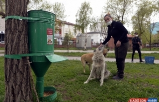 Doğa koruma görevlileri sokak hayvanlarını bayramda...