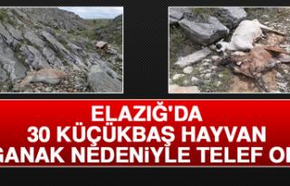Elazığ'da 30 Küçükbaş Hayvan Sağanak Nedeniyle...
