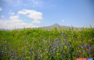 Tekelti Dağı'nda bahar, kartpostallık manzaralar...