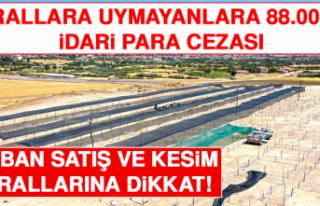 Elazığ Belediyesi Kurban Satış ve Kesim Yerlerinde...