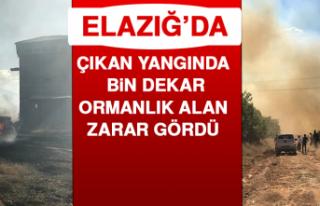 Elazığ'da Çıkan Yangında Bin Dekar Ormanlık...