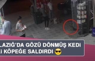 Elazığ'da Çılgın Kedi, İki Köpeğe Saldırdı