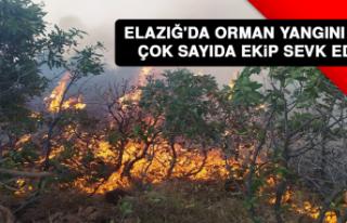 ELAZIĞ'DA ORMAN YANGINI ÇIKTI! ÇOK SAYIDA...