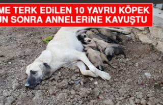 Ölüme Terk Edilen 10 Yavru Köpek, 3 Gün Sonra...