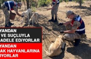 Elazığ Jandarma Ekipleri Sokak Hayvanlarını Unutmuyor