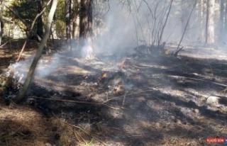 Sarıkamış Ormanları'nda çıkan yangın söndürüldü