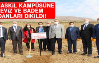 F.Ü. Baskil Kampüsüne Ceviz ve Badem Fidanları...